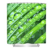 Wet Sago Shower Curtain
