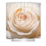 Wet White Rose Shower Curtain