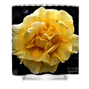 Wet Yellow Rose II Shower Curtain