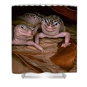We've Got A Secret - Smiling Leopard Geckos Shower Curtain