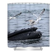 Whale-boarding Shower Curtain
