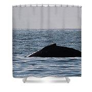 Whale Fin Shower Curtain