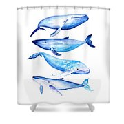 Whale Friends Shower Curtain