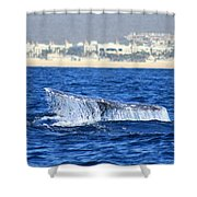 Whale Tail In Cabo Shower Curtain