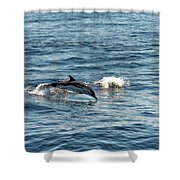 Whale Watching And Dolphins 1 Shower Curtain