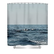 Whale Watching And Dolphins 2 Shower Curtain