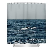 Whale Watching And Dolphins 3 Shower Curtain