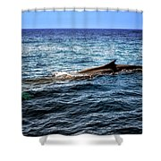 Whale Watching Balenottera Comune 4 Shower Curtain