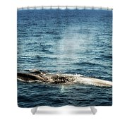 Whale Watching Balenottera Comune 5 Shower Curtain