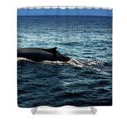 Whale Watching Balenottera Comune 6 Shower Curtain