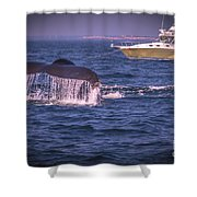 Whale Watching - Humpback Whale 3 Shower Curtain