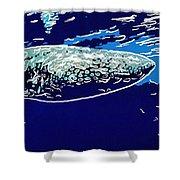 Whaleshark  Shower Curtain