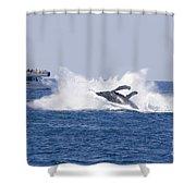 Whalewatcher Show Shower Curtain