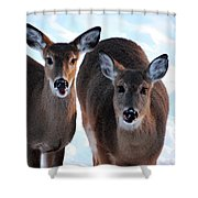 What Do You Say Shower Curtain