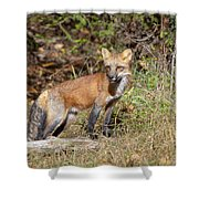 What Does The Fox Say Shower Curtain