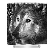 What Is A Wolf Thinking Shower Curtain
