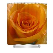 What Is In A Rose? Shower Curtain