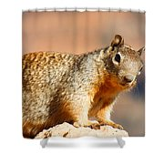 What R U Looking At ??? Shower Curtain