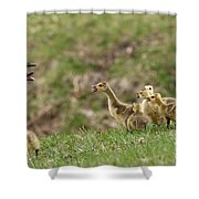 What? What? Shower Curtain