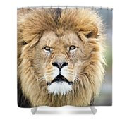 What You Looking At? Shower Curtain