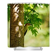 Whats A Woodpecker To Do Shower Curtain