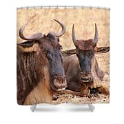 What's Gnu? Shower Curtain