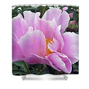 What's In A Name - Bowl Of Beauty Peony Shower Curtain