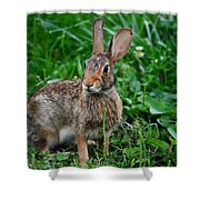 Whats Up Doc Shower Curtain