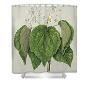 Whau. Cork Tree, New Zealand, By Sarah Featon Shower Curtain