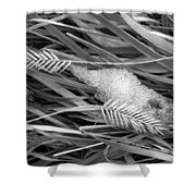 Wheat And Ice Shower Curtain