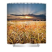 Wheat At Sunset Shower Curtain by Meirion Matthias