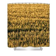 Wheat Beards Shower Curtain