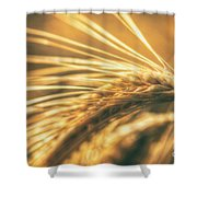 Wheat Ear Shower Curtain