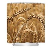 Wheat Ears 1 Shower Curtain