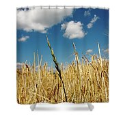 Wheat On The Rhine Shower Curtain