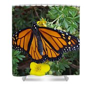 When The Rain Clears Monarch Butterfly Shower Curtain
