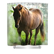 When You Dream Of Horses Shower Curtain
