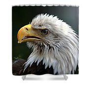 Where Eagles Dare 3 Shower Curtain