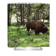 Where The Bison Roam Shower Curtain