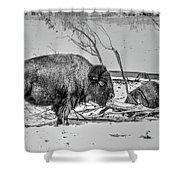 Where The Buffalo Rest Shower Curtain