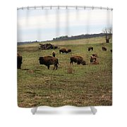 where the Buffalo Roam 3 Shower Curtain
