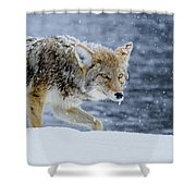 Where The Coyote Walks Shower Curtain