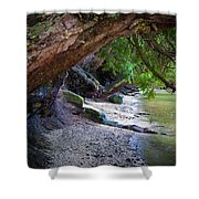 Where The Forest Meets The Sea Shower Curtain