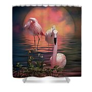 Where The Wild Flamingo Grow Shower Curtain