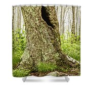 Where Wild Things Play Shower Curtain