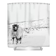 Which Way Is South? Shower Curtain