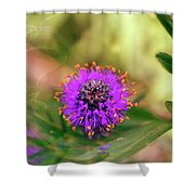 Whimsical Nature Shower Curtain