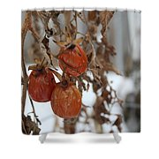 Whimsical Winter Shower Curtain
