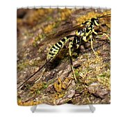 Whip Tailed Wasp Shower Curtain