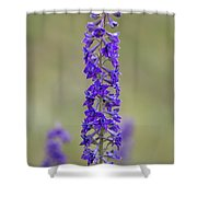 Whipple's Penstemon Shower Curtain